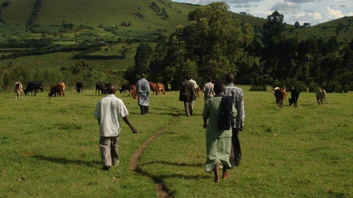 The Community Farm in the Nyamira Village of Uganda