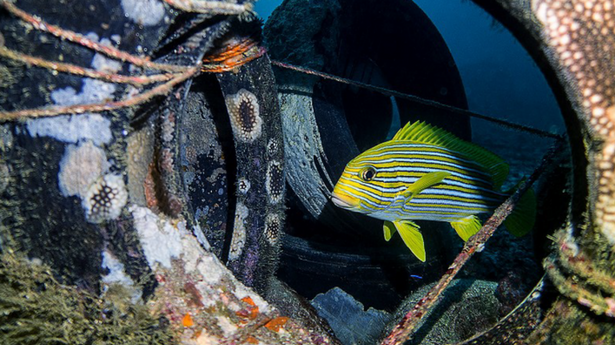 Recycled Bottles Go Pro Cameras And Coral Reef